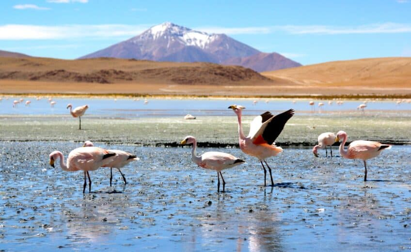 Bolivian Lagoons in Pictures 2