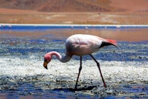 Bolivian Lagoons in Pictures 12