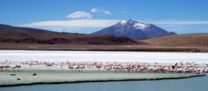 Bolivian Lagoons in Pictures 6