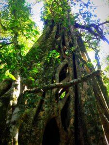 Spot of tree climbing anyone? 1