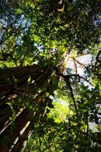 Spot of tree climbing anyone? 3