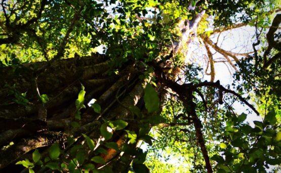 Spot of tree climbing anyone? 4