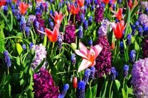 Amsterdam in bloom 2