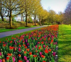 Amsterdam in bloom 3