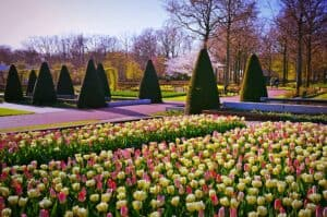 Amsterdam in bloom 5