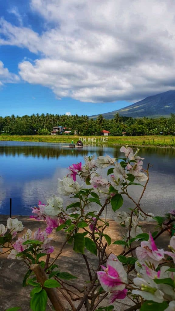 Pink flowers around a lake volcano in background