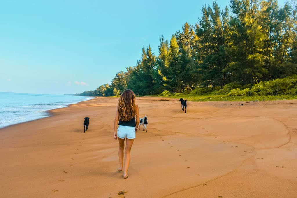 girl walks down a clean golden sand beach with 3 dogs in Phuket in Thailand away from the crowds of this asian island country