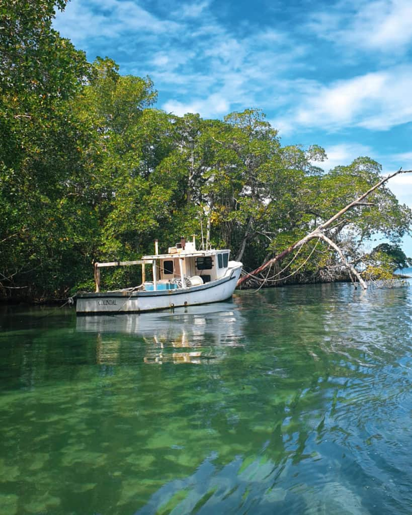 a white boat in a clear green water with a mangrove forest in the background in Laguna Gri Gri one of the Dominican republics off the beaten path places