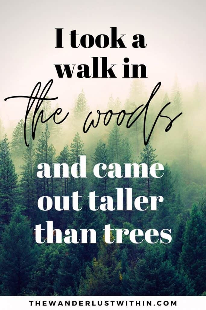 "quotes for hiking - ""I took a walk in the woods and came out taller than trees."" – Unknown"