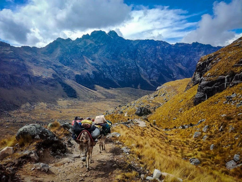 two donkeys carrying bags walk through the mountain ranges of peru. the Santa Cruz Trek is one of the best hikes in South America