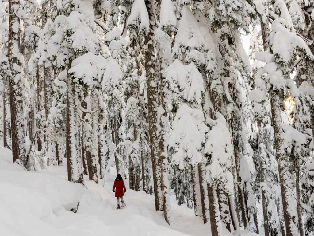 woman in red hikes through forest covered in snow using snow shoes in Norway in winter