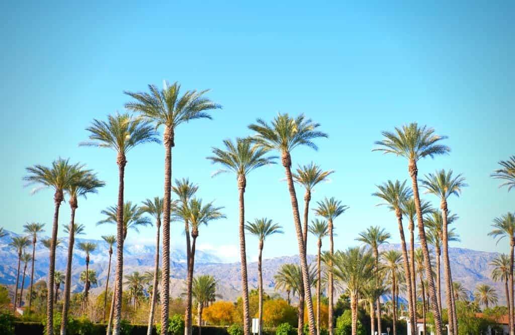 palm springs california instagram captions