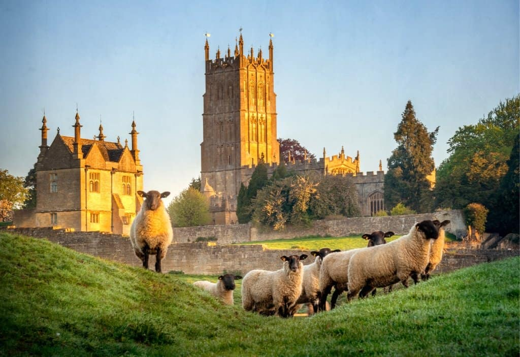 chipping campden church with cotswolds sheep at dawn in cotswolds villages in england