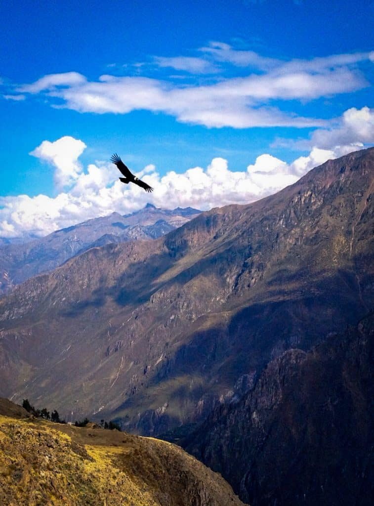 a condor flies In the sky past South American mountain ranges in peru andes