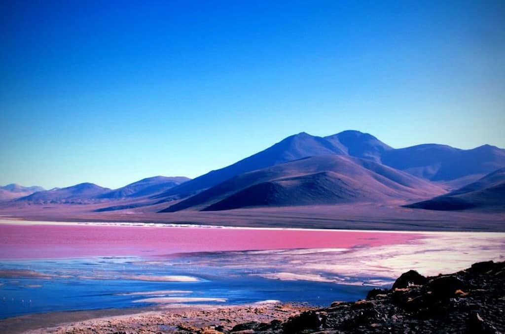 pink lake with blue mountains in background and blue sky in Bolivia called laguna colorada it is a place to go in south america