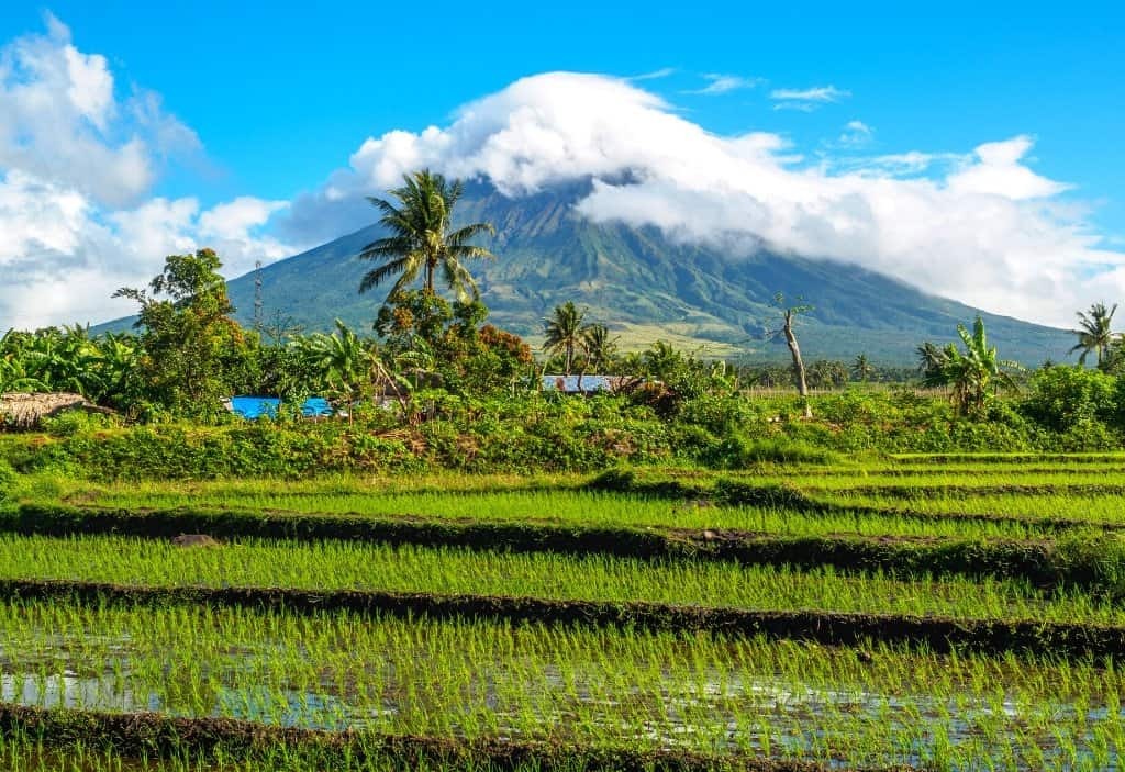 perfect conical shaped volcano with greenery and palm trees in front and green rice fields