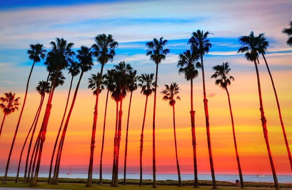 caption sunset with tall palm trees