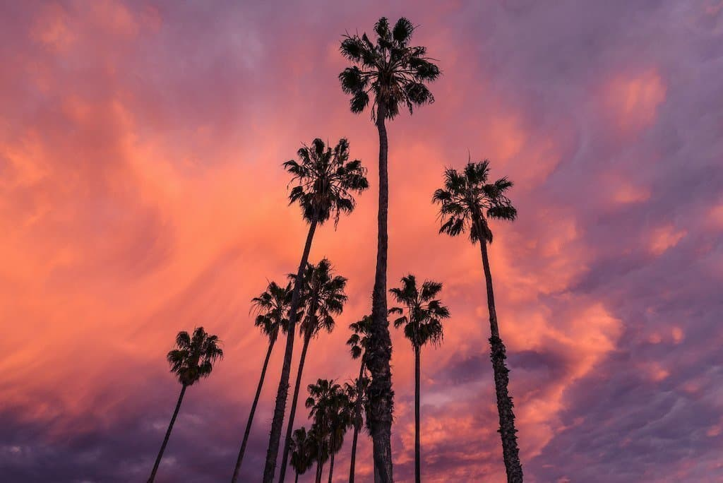 10 palm trees view from below to above with a pink and purple sunset in the background