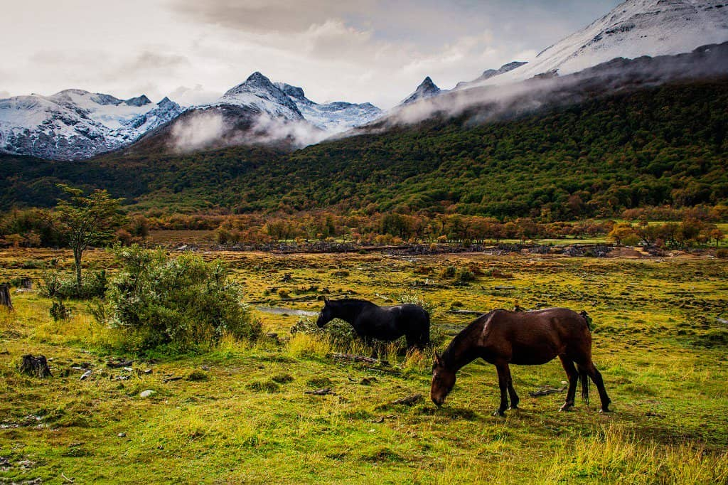 2 horses feed off green grass in ushuaia in patagonia with snow capped mountains in background. the scene is wilderness at its best and one of the best hikes in south america