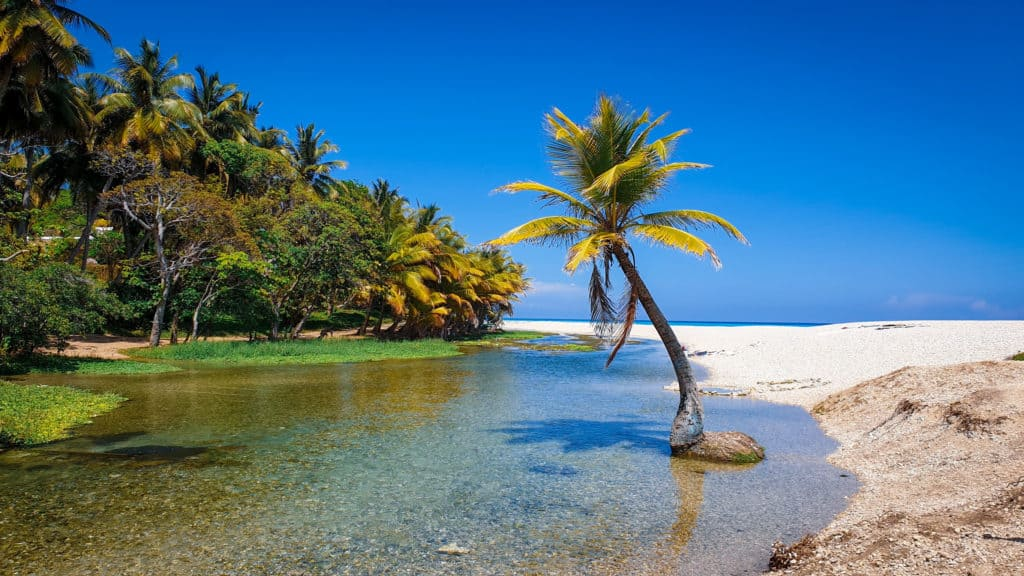 A lone palm tree stands in a small river with beach on one side, jungle on the other side and a blue sunny sky in one of the Dominican republics off the beaten track places