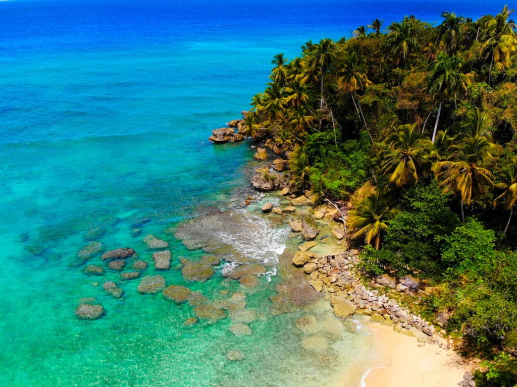 clear turquoise waters and a palm tree jungle with a. beach and stones