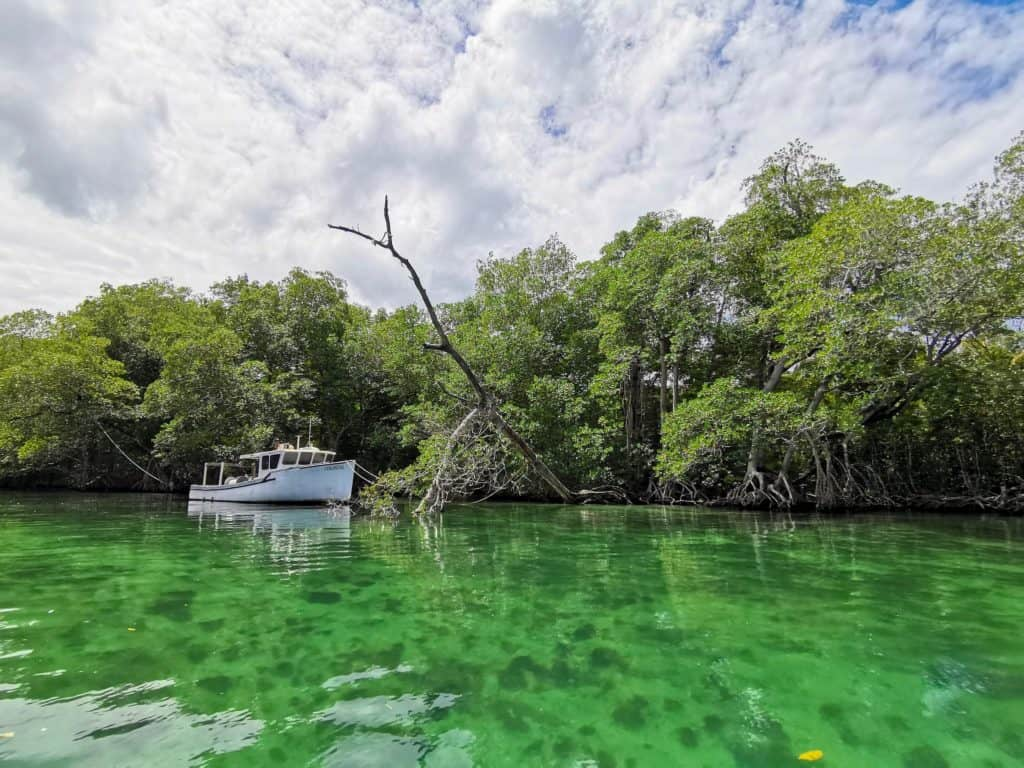 clear tropical green waters of laguna gri gri with a white boat and mangrove trees surrounding the boat in one of the Dominican republics off the beaten track places